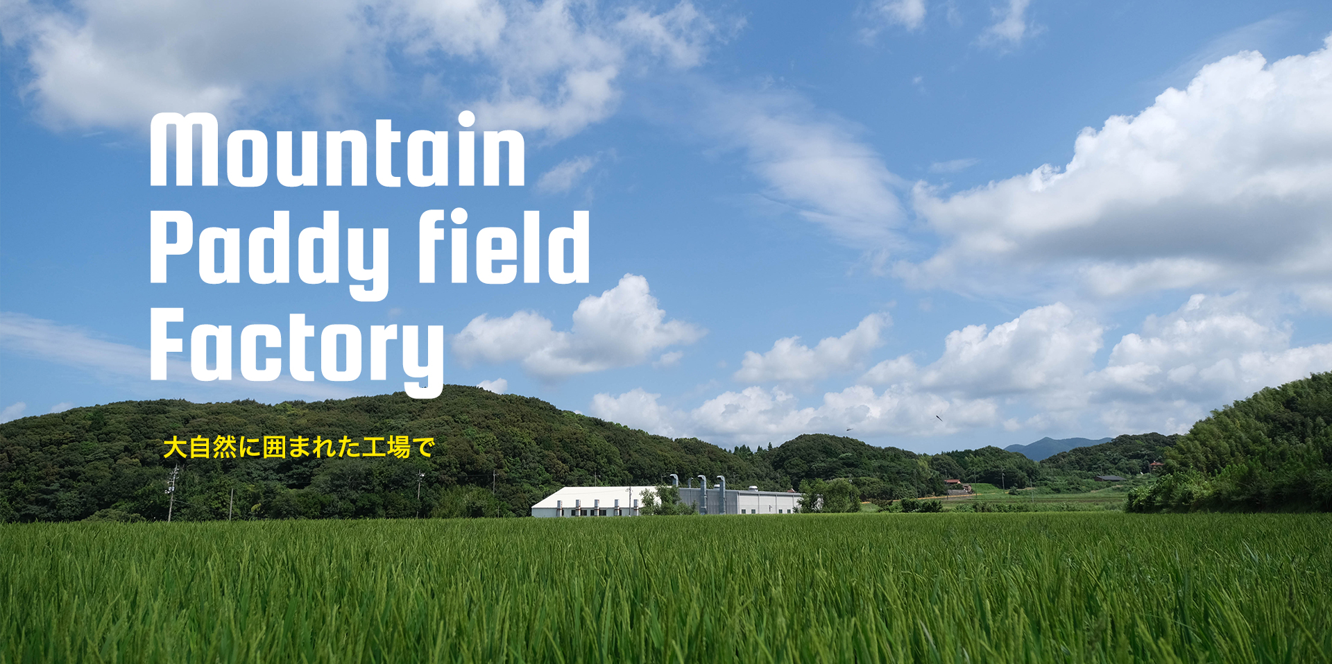 Mountain Paddy field Factory 大自然に囲まれた工場で